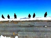 Ξύλινο διάστημα αντιγράφων με τα κοράκια και το χιόνι σε το στο μπλε ουρανό Στοκ εικόνες με δικαίωμα ελεύθερης χρήσης