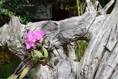 Ξύλινο και ρόδινο λουλούδι ορχιδεών ομορφιάς Στοκ εικόνα με δικαίωμα ελεύθερης χρήσης