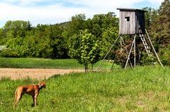 Ξύλινο παρατηρητήριο κυνηγιού στο τσεχικό τοπίο Επαρχία στη Δημοκρατία της Τσεχίας Άγριο κυνήγι παιχνιδιών Στοκ φωτογραφία με δικαίωμα ελεύθερης χρήσης