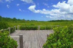 Ξύλινο πεζούλι με τη φύση πράσινη στοκ εικόνες
