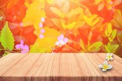 ξύλινο ράφι πινάκων με το λουλούδι Plumeria στο υπόβαθρο φύσης Στοκ φωτογραφία με δικαίωμα ελεύθερης χρήσης