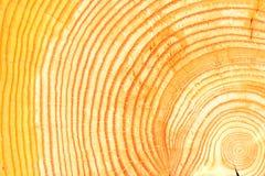 Ξύλινο σιτάρι Στοκ εικόνα με δικαίωμα ελεύθερης χρήσης