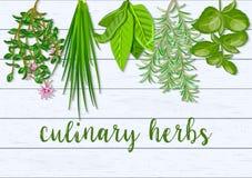 Ξύλινο Σκανδιναβικό υπόβαθρο της ένωσης των αγροτικών φρέσκων μαγειρικών κρεμώντας χορταριών Βασιλικός πρασινάδων, δεντρολίβανο,  Στοκ Εικόνες