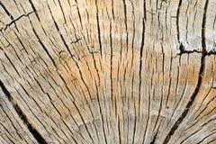 Ξύλινο σχέδιο δέντρων στοκ εικόνα με δικαίωμα ελεύθερης χρήσης