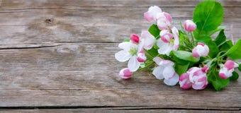 Ξύλινο υπόβαθρο άνοιξη με τα λουλούδια της Apple Στοκ Φωτογραφίες