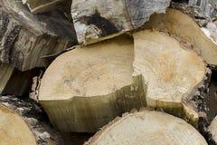 Ξύλινο υπόβαθρο ξυλείας σωρών Τα πριόνια κόβουν τα ξύλινα κούτσουρα στοκ εικόνες