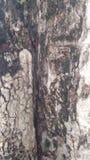 Ξύλινο ξύλινο υπόβαθρο σκηνικού σχεδίων Στοκ φωτογραφία με δικαίωμα ελεύθερης χρήσης