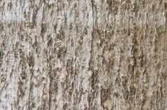 Ξύλινο υπόβαθρο συστάσεων φλοιών στοκ φωτογραφία με δικαίωμα ελεύθερης χρήσης