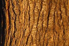 Ξύλινο υπόβαθρο σύστασης σανίδων στοκ εικόνες