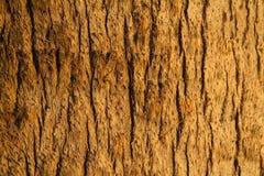 Ξύλινο υπόβαθρο σύστασης σανίδων στοκ εικόνα με δικαίωμα ελεύθερης χρήσης