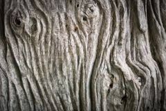 Ξύλινο υπόβαθρο σύστασης χρώματος φύσης παλαιά σύσταση ξύλινη Στοκ Φωτογραφίες