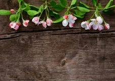 Ξύλινο υπόβαθρο Grunge με τα λουλούδια της Apple Στοκ Εικόνα