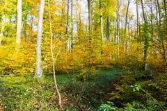 Ξύλινο φθινόπωρο Στοκ φωτογραφίες με δικαίωμα ελεύθερης χρήσης