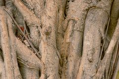 ξύλινο textura σύστασης καφέδων ραγών árbol στοκ εικόνες