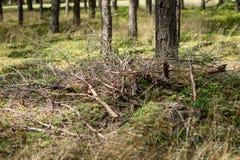 Ξύλο για μια εστία που τακτοποιείται στους κωνοφόρους δασικούς κλάδους στοκ φωτογραφία με δικαίωμα ελεύθερης χρήσης
