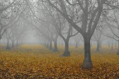 ξύλο καρυδιάς αλσών ομίχλ& Στοκ εικόνες με δικαίωμα ελεύθερης χρήσης