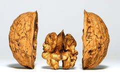 ξύλο καρυδιάς κοχυλιών Στοκ Φωτογραφία