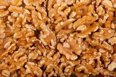 ξύλο καρυδιάς σπόρων ανασ&k Στοκ εικόνες με δικαίωμα ελεύθερης χρήσης
