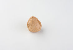 ξύλο καρυδιάς Στοκ Φωτογραφίες