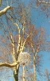 Ξύλο που τεμαχίζει στο Ζάγκρεμπ Zrinjevac στοκ φωτογραφίες με δικαίωμα ελεύθερης χρήσης
