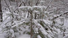 Ξύλο στο χιόνι απόθεμα βίντεο