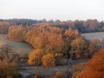 Ξύλο Turveylane στο πρόσφατο χρώμα φθινοπώρου στοκ εικόνα με δικαίωμα ελεύθερης χρήσης