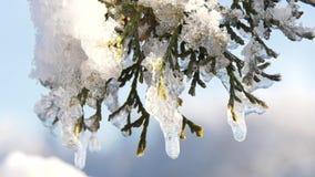 Ξύπνημα φύσης μετά από το χειμώνα φιλμ μικρού μήκους
