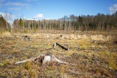 Ξύλα που καταγράφουν το κολόβωμα μετά από τα ξύλα αποδάσωσης Στοκ εικόνα με δικαίωμα ελεύθερης χρήσης