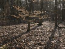 Ξύλα σε ένα πρωί φθινοπώρου Στοκ εικόνες με δικαίωμα ελεύθερης χρήσης