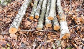 Ξύλα στο δάσος Στοκ Εικόνες