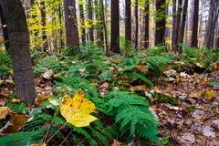 Ξύλα φθινοπώρου στοκ εικόνες