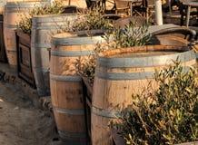 Ξύλινα βαρέλια κρασιού Στοκ Εικόνες
