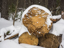 Ξύλινα κούτσουρα κάτω από το χιόνι Στοκ φωτογραφίες με δικαίωμα ελεύθερης χρήσης