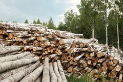 Ξύλινα κούτσουρα με το δάσος στο υπόβαθρο Στοκ Φωτογραφίες