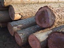 Ξύλινα κούτσουρα σωρών Στοκ Φωτογραφία