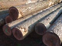 Ξύλινα κούτσουρα σωρών Στοκ φωτογραφίες με δικαίωμα ελεύθερης χρήσης