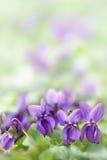 Ξύλινα λουλούδια βιολέτων Στοκ εικόνες με δικαίωμα ελεύθερης χρήσης