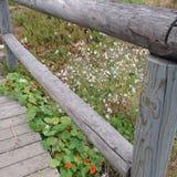 Ξύλινα λουλούδια Στοκ φωτογραφία με δικαίωμα ελεύθερης χρήσης