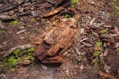 Ξύλινα υπολείμματα στο έδαφος Στοκ φωτογραφία με δικαίωμα ελεύθερης χρήσης