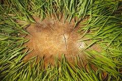 Ξύλινα φυσικό υπόβαθρο και διάστημα για το κείμενο Στοκ εικόνα με δικαίωμα ελεύθερης χρήσης