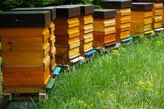 Ξύλινες κυψέλες με τις δραστήριες μέλισσες Στοκ Εικόνες