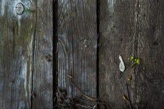 Ξύλινες σανίδες Στοκ Εικόνες