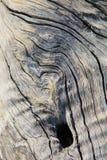 Ξύλινες υπόβαθρο και σύσταση - σκληρές περιγράμματα και μορφές Στοκ Εικόνες