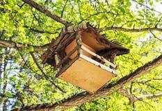 Ξύλινη ένωση σπιτιών πουλιών στο πράσινο δέντρο, λεπτομερές φυσικό Sc Στοκ εικόνες με δικαίωμα ελεύθερης χρήσης