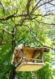 Ξύλινη ένωση σπιτιών πουλιών στο πράσινο δέντρο, θέμα ορνιθολογίας Στοκ Φωτογραφίες