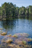 Ξύλινη λίμνη Στοκ Εικόνες