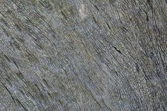 Ξύλινη ανασκόπηση Στοκ εικόνα με δικαίωμα ελεύθερης χρήσης