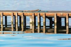 Ξύλινη αποβάθρα με τις χορδές Στοκ εικόνες με δικαίωμα ελεύθερης χρήσης