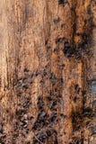 Ξύλινη αποσύνθεση Στοκ Εικόνες