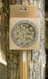 Ξύλινη βούρτσα με μια λαβή Στοκ εικόνες με δικαίωμα ελεύθερης χρήσης